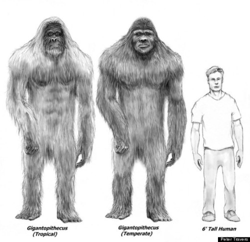 Bigfoot sketch by Peter Travers