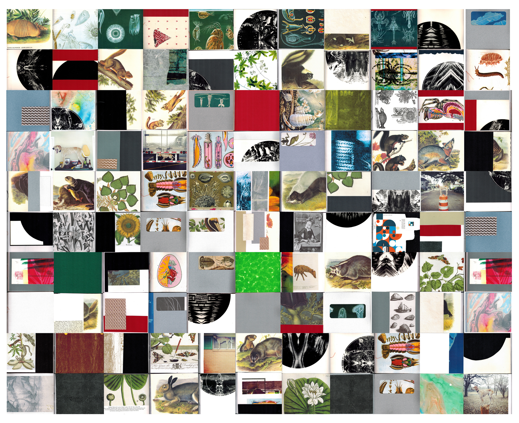Book Cover Collage Editor ~ Small fierce things would like to come home with you